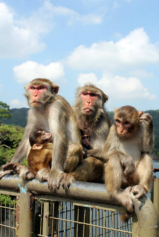 monkeys-mountain-hong-kong-asian-interior-design  Top 15 Reasons we should all be living in Hong Kong monkeys mountain hong kong asian interior design